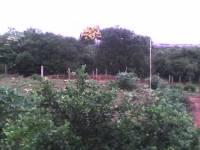 Arvores Nativas conservadas